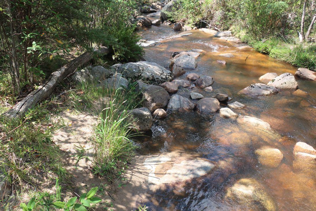 Toddlers Waddle - Gibraltar Creek