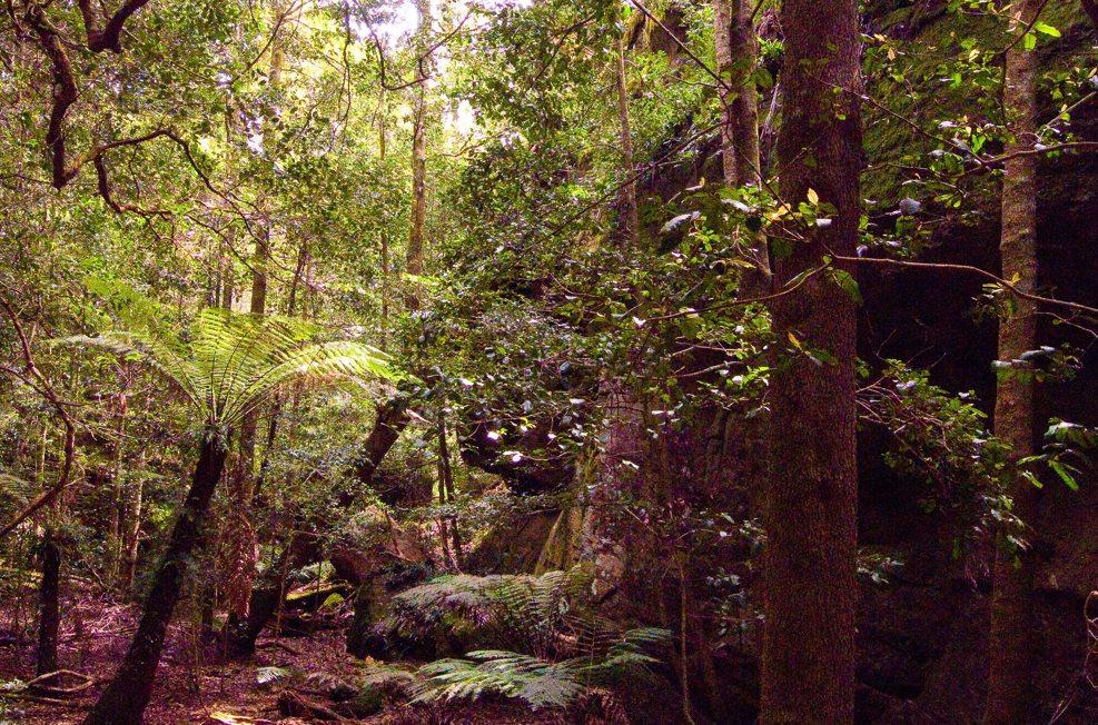 Little Forest Plateau-Gaol House Pass-Clyde River-Dummal Creek-Talaterang-Return