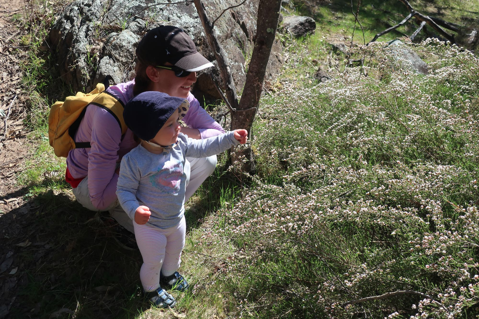 Admiring the spring flowers in a gully below Mt Tennent, Namadgi NP, CBC Toddlers Toddle