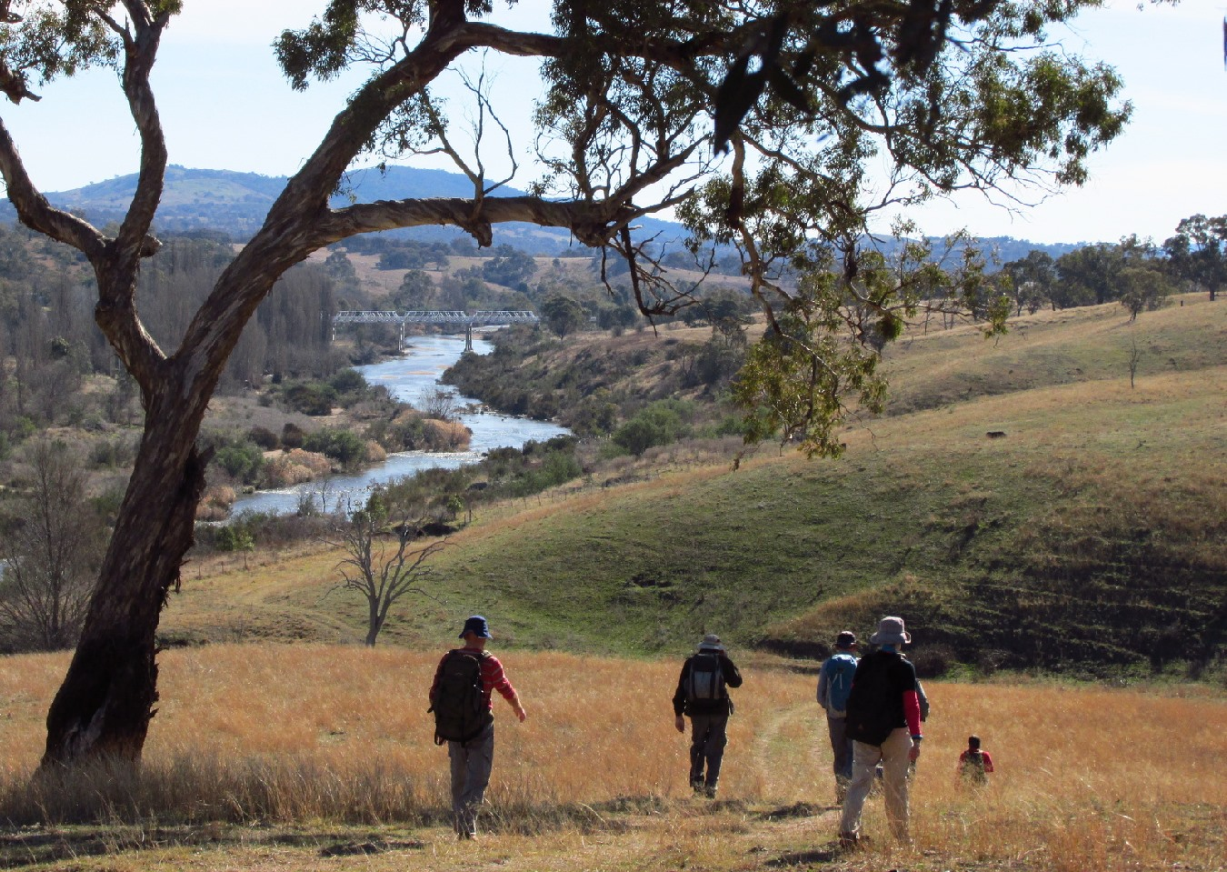 Grassy track walking beside the Murrumbidgee River near Tharwa, by Mike Bremers