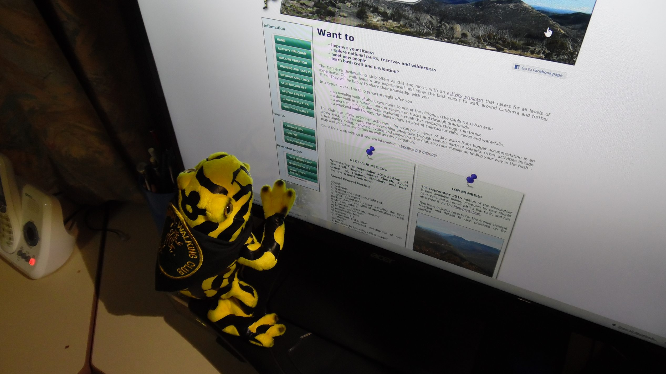 Frog with former web site
